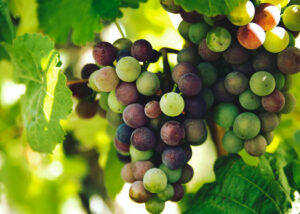 The Best 6 Wine Regions to Visit in Spain